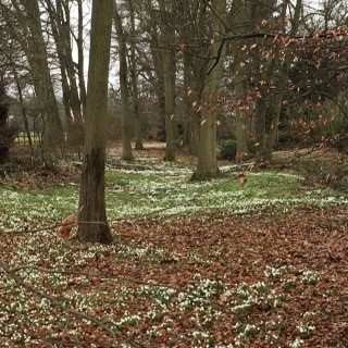 hope and snowdrops picture 3